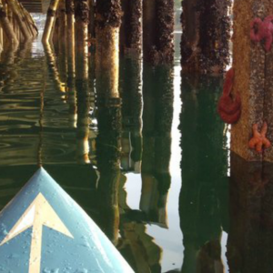 Stand up paddle boarding under the Shilshole pier.